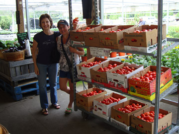 selecting ripe plum tomatoes for tomato sauce canning