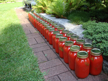 freshly canned plum tomatoes
