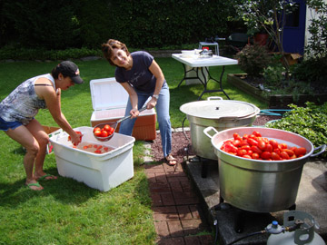 boiling the plum tomatoes before canning
