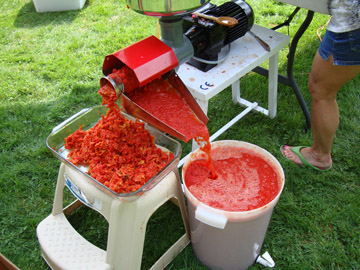 running sauce tomatoes through an electric grinder before canning